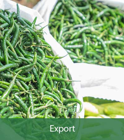 Agro4you Food Exportation
