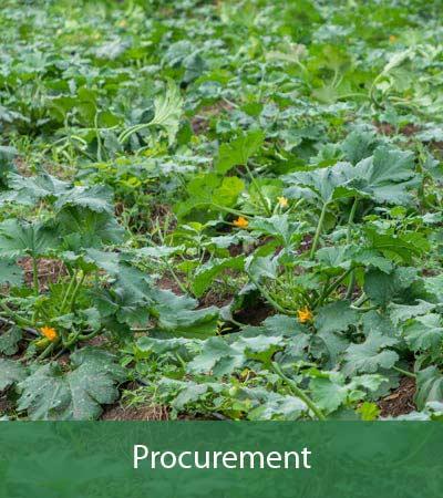 Agro4you Procurement