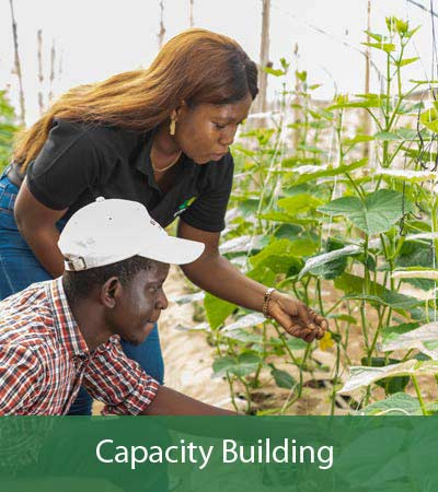 Agro4you Capacity Building